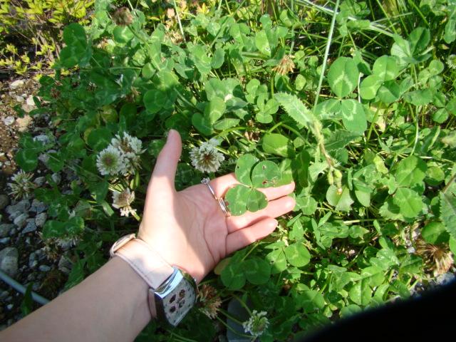 2009年6月 河口湖撮影旅行 西湖~蔵ベット 015.jpg